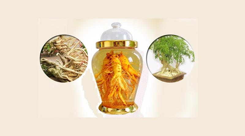 bài thuốc rễ đinh lăng ngâm rượu chữa đau lưng
